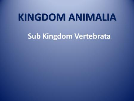 KINGDOM ANIMALIA Sub Kingdom Vertebrata. KINGDOM ANIMALIA Sub Kingdom VERTEBRATA Sub Kingdom AVERTEBRATA.