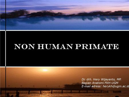 NON HUMAN PRIMATE Dr. drh. Hery Wijayanto, MP. Bagian Anatomi FKH-UGM