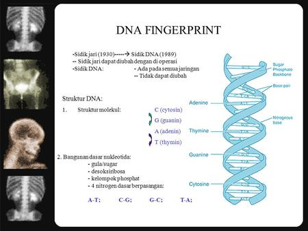DNA FINGERPRINT Struktur DNA: Sidik jari (1930)----- Sidik DNA (1989)