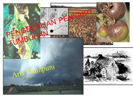 PENGEDALIAN PENYAKIT TUMBUHAN Aris Mumpuni. Disease Progress Disease on plants usually starts out at a low level, a small number of plants affected and.
