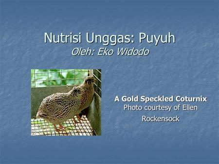 Nutrisi Unggas: Puyuh Oleh: Eko Widodo A Gold Speckled Coturnix Photo courtesy of Ellen Rockensock.