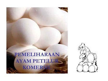 PEMELIHARAAN AYAM PETELUR KOMERSIL. FASE GROWER BROODING HOUSE AS GROWER HOUSE GROW-LAY- HOUSE BROOD – GROW – LAY- HOUSE KEPADATAN PERLENGKAPAN MAKAN.