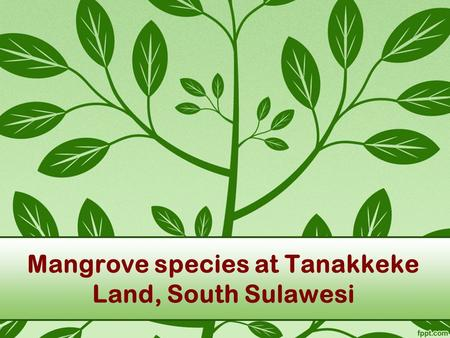Mangrove species at Tanakkeke Land, South Sulawesi