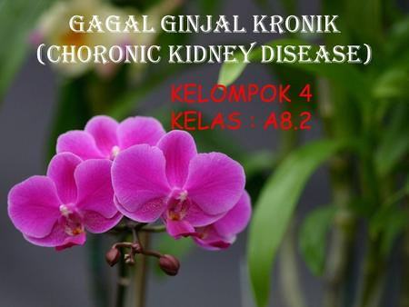 GAGAL GINJAL KRONIk (CHORONIC KIDNEY DISEASE)