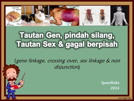 Tautan Gen, pindah silang, Tautan Sex & gagal berpisah (gene linkage, crossing over, sex linkage & non disjunction) Qumillaila 2014.