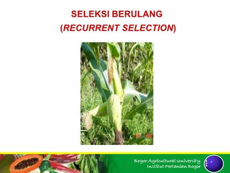 (RECURRENT SELECTION)