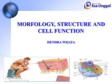 MORFOLOGY, STRUCTURE AND CELL FUNCTION HENDRA WIJAYA.