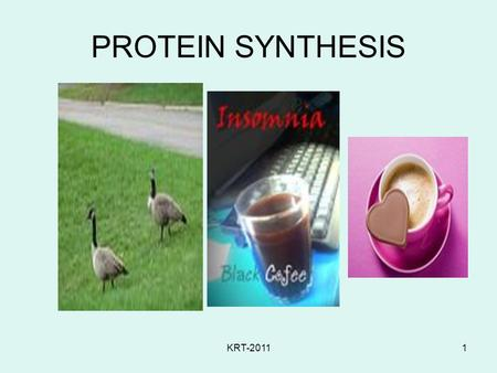 PROTEIN SYNTHESIS KRT-2011.
