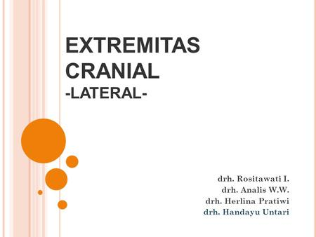 EXTREMITAS CRANIAL -LATERAL-