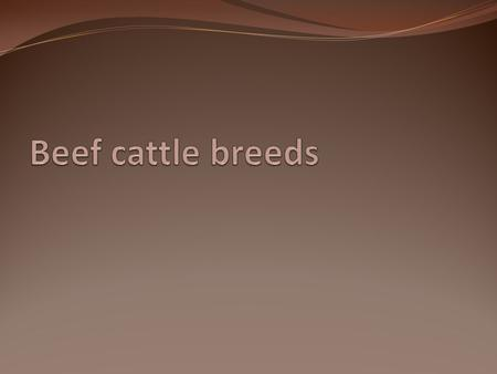 Beef cattle breeds.