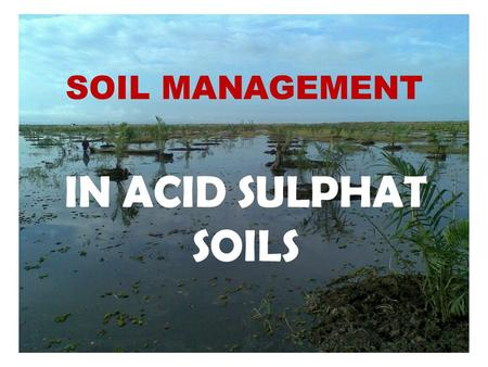 SOIL MANAGEMENT IN ACID SULPHAT SOILS. Acid Sulphate Soil ASS Soil Management Water Management Max Yield Infrastruktur hidrologi Tata Lahan dan air Fertilizer.