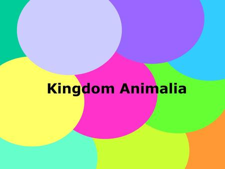Kingdom Animalia.