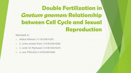 Double Fertilization in Gnetum gnemon: Relationship between Cell Cycle and Sexual Reproduction Kelompok 6: 1. Nidaul Hikmah (111810401039) 2. 2. Arina.