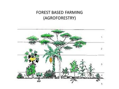 FOREST BASED FARMING (AGROFORESTRY)