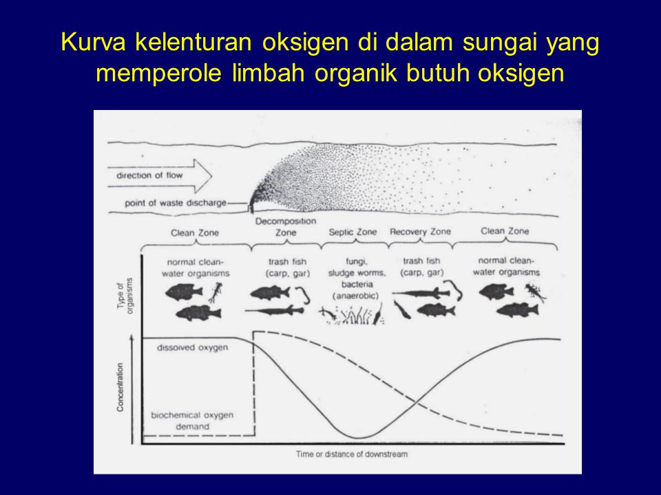 Lapisan suhu di danau Epilimnion (hangat) Thermocline Hypolimnion (Dingin) Kurva distribusi suhu