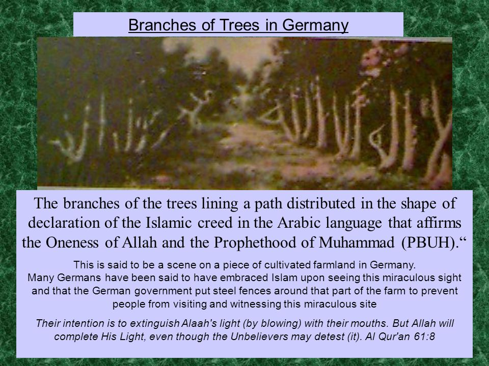 The branches of the trees lining a path distributed in the shape of declaration of the Islamic creed in the Arabic language that affirms the Oneness of Allah and the Prophethood of Muhammad (PBUH). This is said to be a scene on a piece of cultivated farmland in Germany.