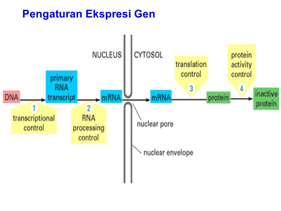 Sel somatis pd mamalia memiliki 2 copy genome (diploid) Kontribusi nyata yg diberikan induk jantan & betina pada anak-anaknya  berbeda-beda Bagaimana gen yang diwariskan dr maternal & paternal berbeda ekspresi .