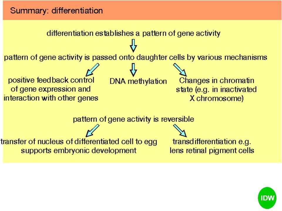 Pd setiap generasi harus mampu di HAPUS (Off) dan BENTUK (On) Genomic Imprinting, suatu proses EPIGENETIK yg dinamis, yg terlibat dalam pengaturan ekspresi sebagian kecil gen dari genome mamalia melalui proses modifikasi STRUKTUR DNA Memberikan efek terhadap fenotip