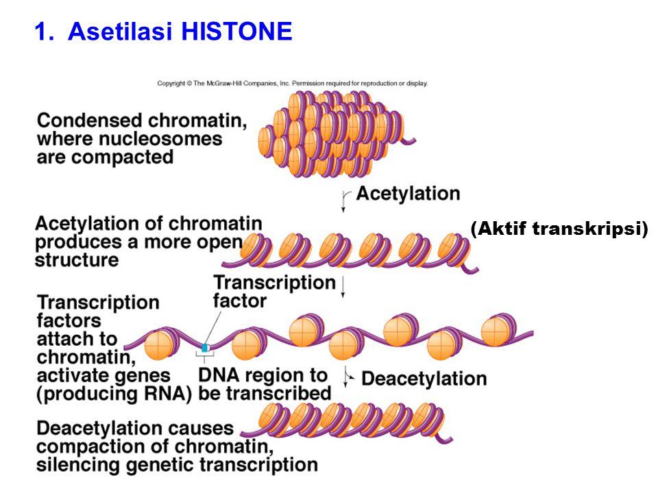 Asetilasi residu lisine pd posisi terminus dr protein histone menghilangkan muatan positif  mengurangi afinitas protein histon ke DNAhistone Enzim polimerase RNA polymerase dan faktor transkripsi lebih mudah berikatan pada promoter Umumnya, asetilasi histon memicu transkripsi; deasetilasi histon menekan transkripsi