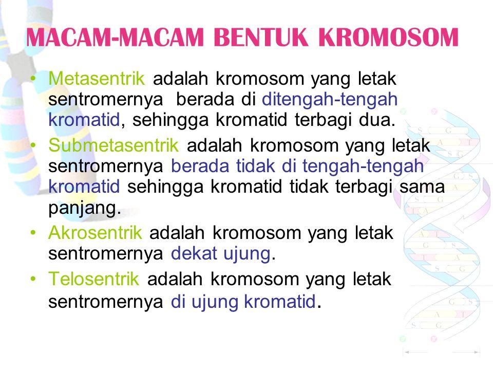 MACAM-MACAM BENTUK KROMOSOM Metasentrik adalah kromosom yang letak sentromernya berada di ditengah-tengah kromatid, sehingga kromatid terbagi dua.