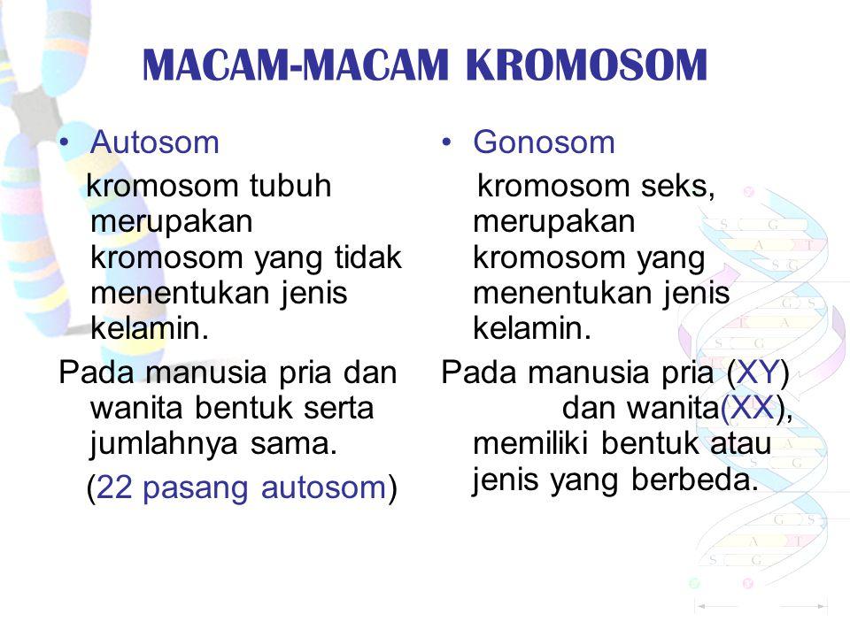 MACAM-MACAM KROMOSOM Autosom kromosom tubuh merupakan kromosom yang tidak menentukan jenis kelamin.