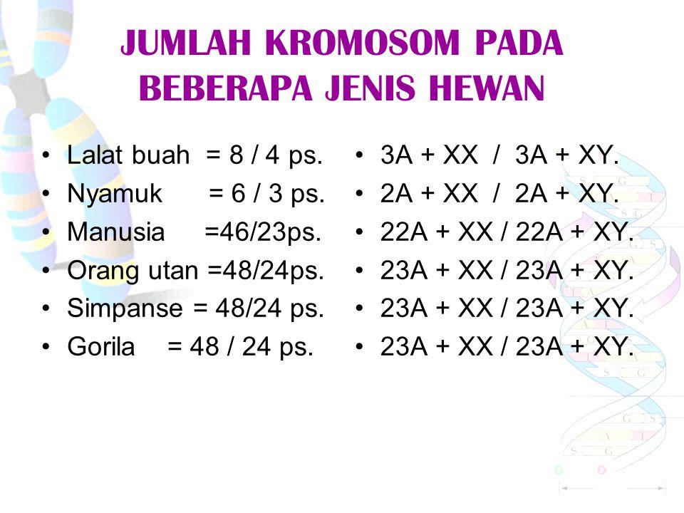 JUMLAH KROMOSOM PADA BEBERAPA JENIS HEWAN Lalat buah = 8 / 4 ps.