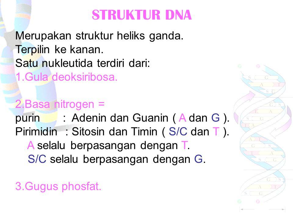 STRUKTUR DNA Merupakan struktur heliks ganda.Terpilin ke kanan.