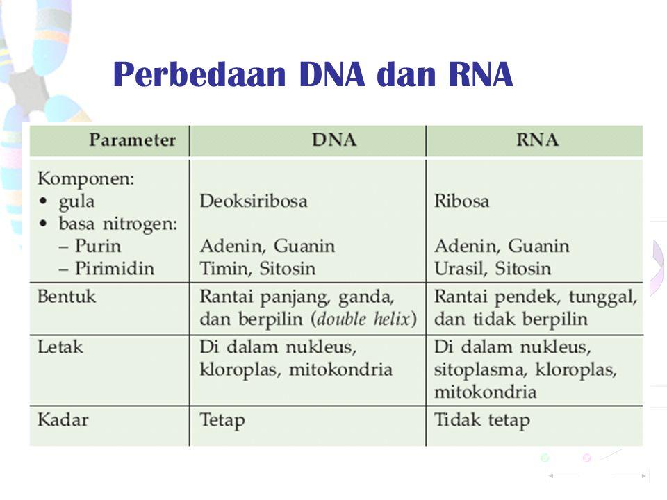 Perbedaan DNA dan RNA