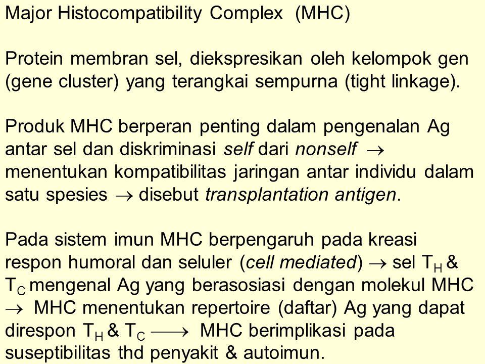 MHC adalah kumpulan gen (gene array); pada manusia terletak pada khromosom 6 disebut kompleks HLA, pada tikus terletak pada khromosom 17 disebut kompleks H2.