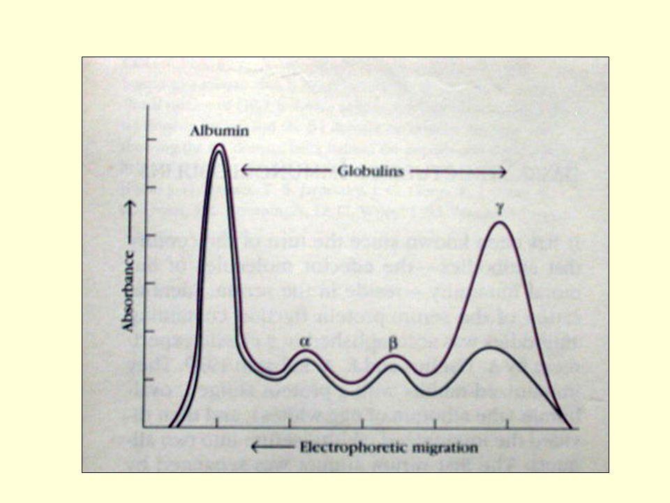 Molekul Ig.