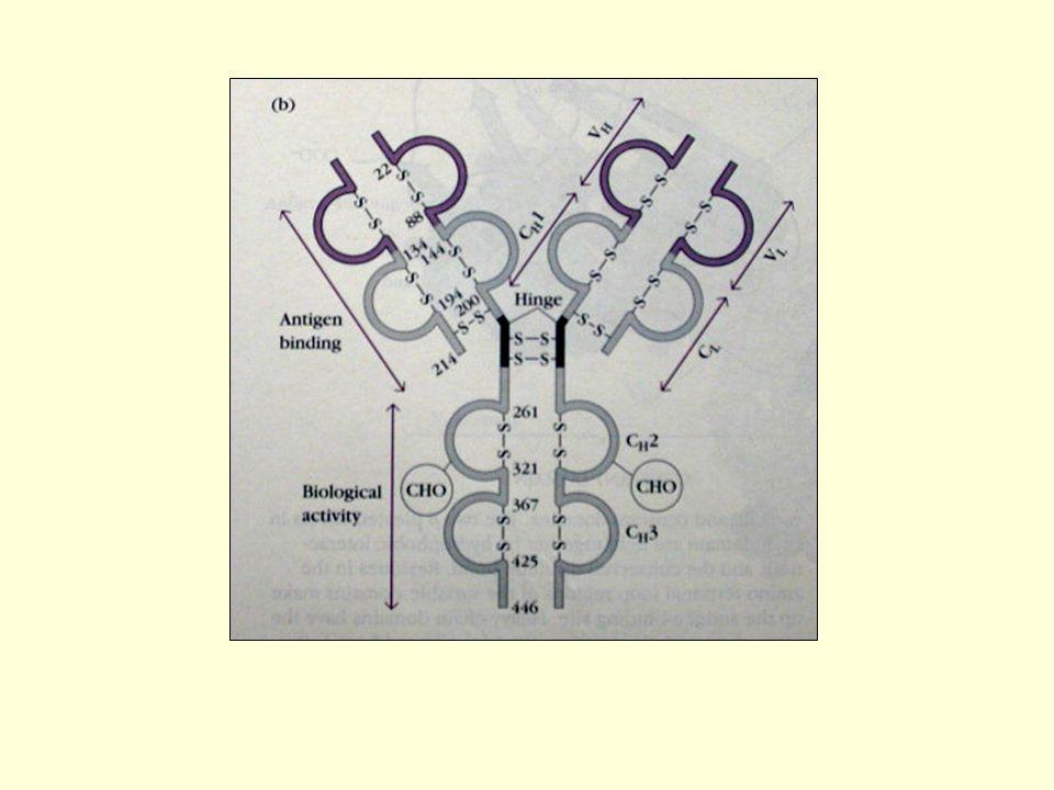 Variasi molekul imunoglobulin : Ditentukan oleh determinan pada molekul Ig, apabila molekul Ig digunakan sebagai antigen (imunogen) untuk menginduksi pembentukan anti Ig (antibodi).