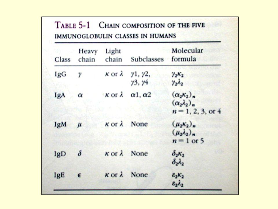 Ada 5 klas Ig pada semua spesies (isotip), ditentukan oleh rantai H yang mengkonstruksinya IgG – bagian terbesar Ig dalam serum normal, meliputi 70 – 75% total Ig.