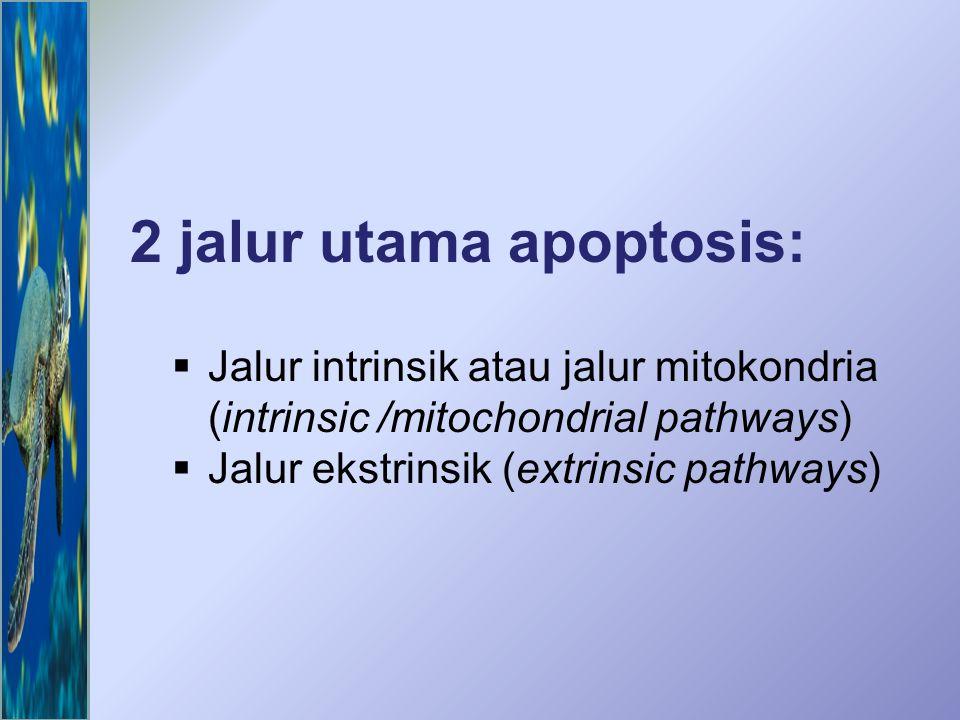 Beberapa jalur yang dapat mengakibatkan apoptosis Jalur apoptosis dapat diinisiasi oleh terikatnya sitokin yang menginduksi kematian, seperti ligan Fas (Fas-L) atau TNF  pada reseptor membran sel, oleh berbagai stimuli stress ekstrasel, atau oleh stimuli intrasel seperti kerusakan DNA.