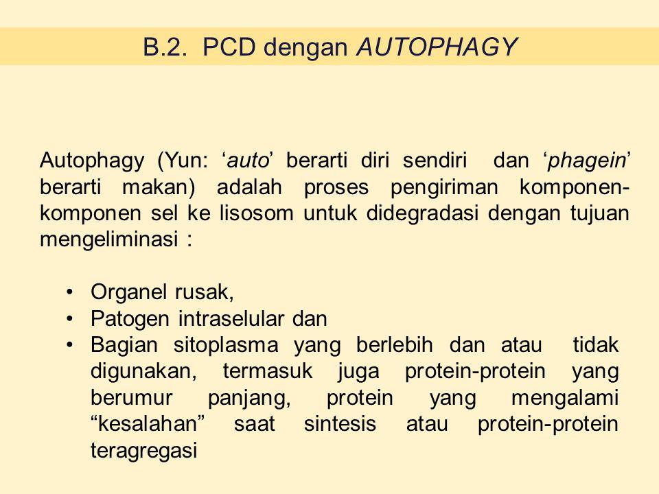 3 jenis autofagi berdasar cara pengiriman ke lisosom 1.Macroautophagy 2.Microautophagy 3.CMA (chaperone-mediated autophagy)