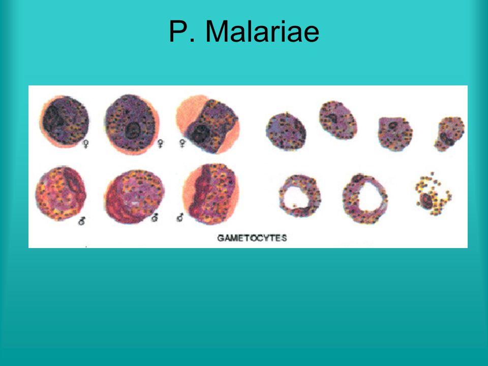 Benda-benda yang gambarannya menyerupai parasit  bisa menimbulkan kesalahan dalam diagnosis parasit malaria.