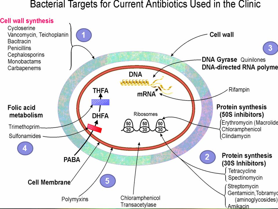 50 …mechanisms of antimicrobial resistance OrganismMech of resistclinicalimplications ________________________________________________________ Str pneumoniaealteration of PBPrelative resistant to  -lactam agents (pen cillin, cephalosp) alteration in the resistance to macrolide ribosomal binding site of antibiotics efflux pump to expelrelative resist to macro an antibiotics from the lide cyoplasm Pong AL.
