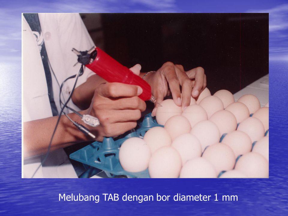 Memasukkan zat uji dalam yolk TAB