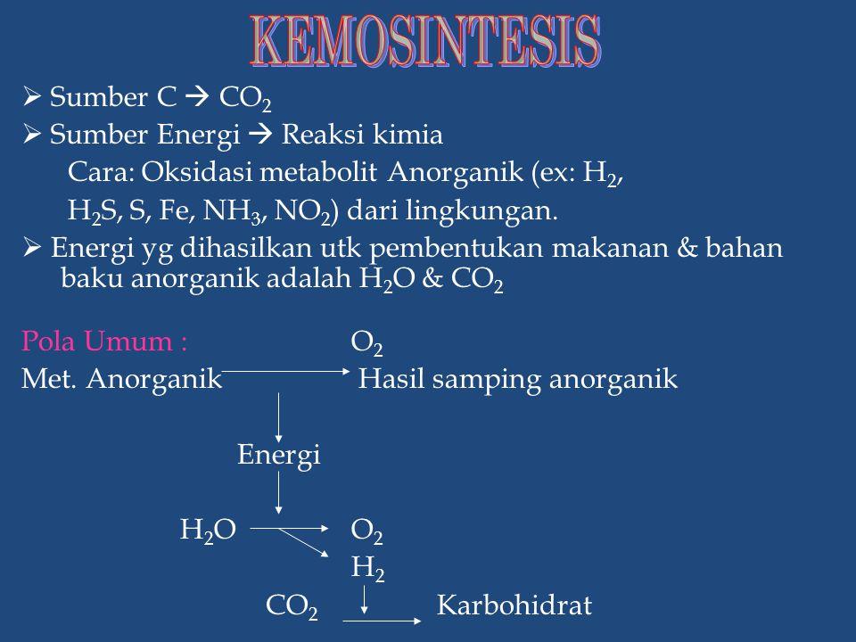  Faktor Luar  Cahaya  Temperatur  Air  Oksigen  Karbondioksida  Unsur hara  Faktor dalam  Kandungan klorofil  Morfologi daun  Anatomi daun FAKTOR YANG MEMPENGARUHI FOTOSINTESIS