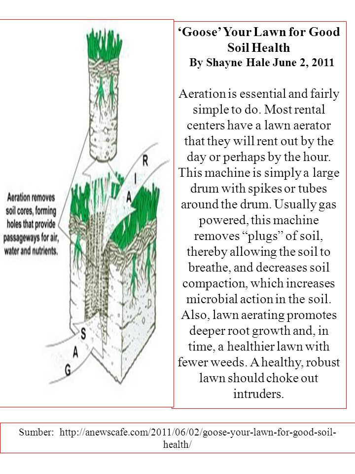 'Goose' Your Lawn for Good Soil Health By Shayne Hale June 2, 2011 Aeration is essential and fairly simple to do.