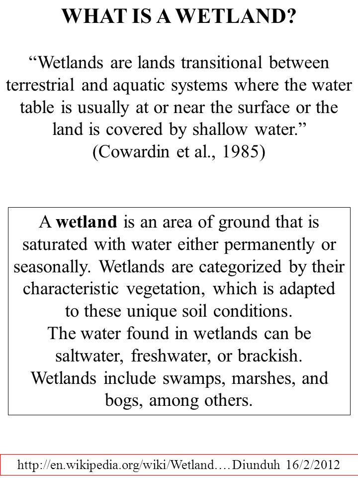 http://en.wikipedia.org/wiki/Wetland….Diunduh 16/2/2012 WHAT IS A WETLAND.