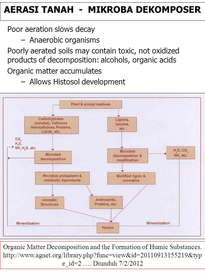 Organic Matter Decomposition and the Formation of Humic Substances.
