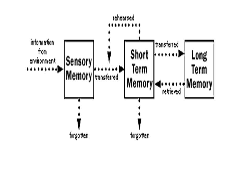 The person as information processor Perilaku manusia Produk strategi pengolahan informasi yang rasional, yang mengarahkan penyandian, penyimpanan dan pemanggilan informasi