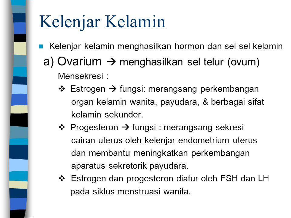 Kelenjar Kelamin b) Testis : –Menghasilkan hormon Testosteron dan sel sperma –Fungsi sebagai pembentuk seks sekunder atau alat kelamin pria dan meningkatkan anabolik protein dan menghambat katabolisme protein.
