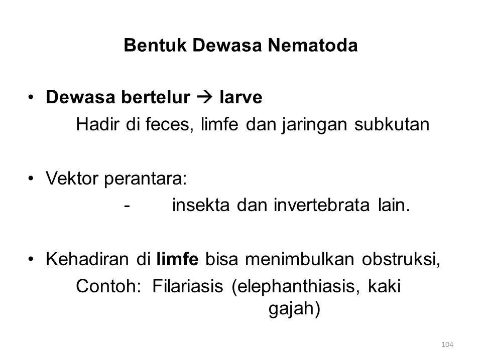 BeberapaTipe Nematoda -Ascaris lumbricoides (cacing usus) (pada manusia) -Ankylostoma (cacing tambang) - A.