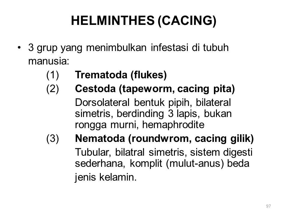 Bentuk Dewasa Cacing (1) Fluke (Trematoda ordo Digenea) Hidup di usus, saluran napas, beberapa bisa hidup di darah.