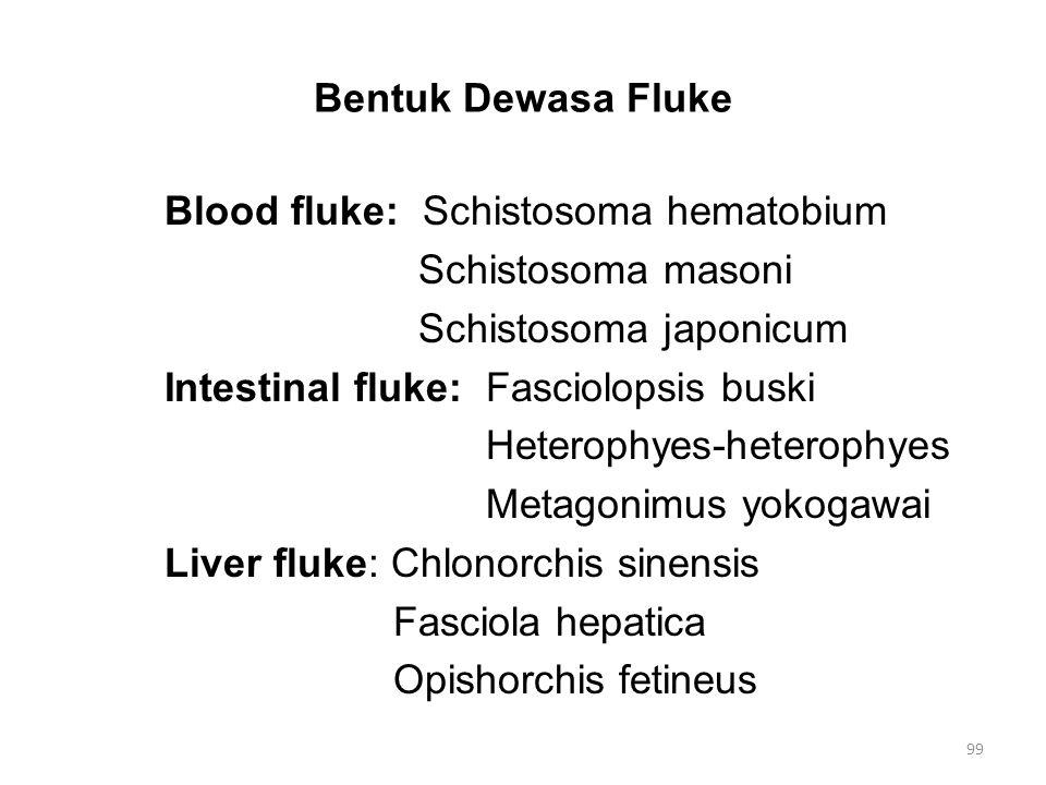 Bentuk Dewasa (2)Tapeworm (Cacing pipih, pita, Cestoda) Parasit usus, tidak memiliki sistem digesti.