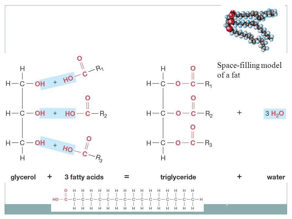 Molecular Structure of a Fat