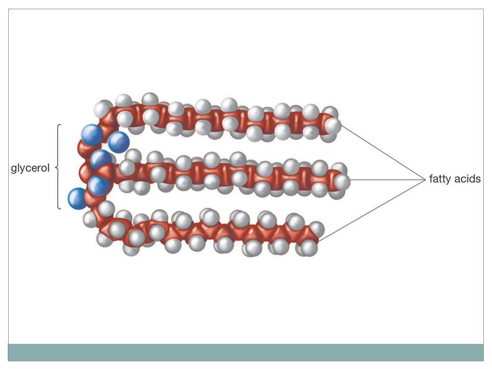 Klasifikasi lipid lipida sumber hewani nabati Dapat tidaknya dihidrolisis air (disaponifikasi) Lipida yang dapat disaponifikasi Lipida yang tidak dapat disaponifikasi Ada tidaknya senyawa lain yang bergabung Lipida sederhana Lipida gabungan Turunan lipid