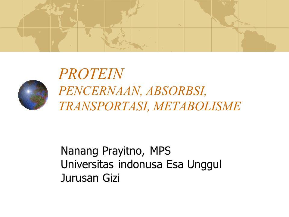 PENCERNAAN Sebagian besar protein dicernakan menjadi AA, selebihnya tripeptida dan dipeptida Secara Mekanik Didalam mulut  tidak terdapat enzym dalam pemecahan protein Secara kimiawi 1.