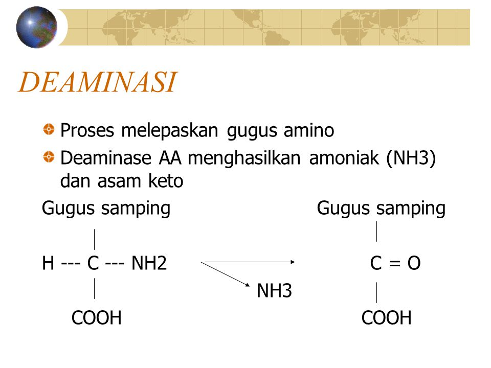 DEAMINASI AMONIA Pemecahan AA dengan melepaskan gugus NH2 didalam hati  terbentuk : a.